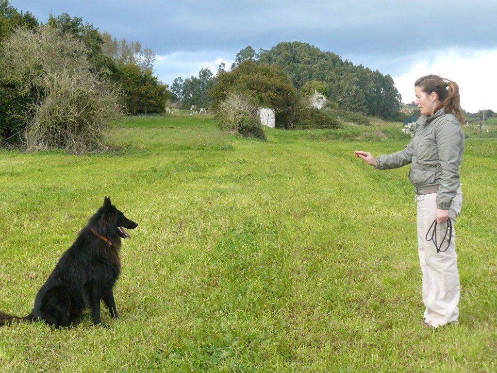 How To Teach A Dog To Sit And Stay Dog Sit Petsrank Com Dogs