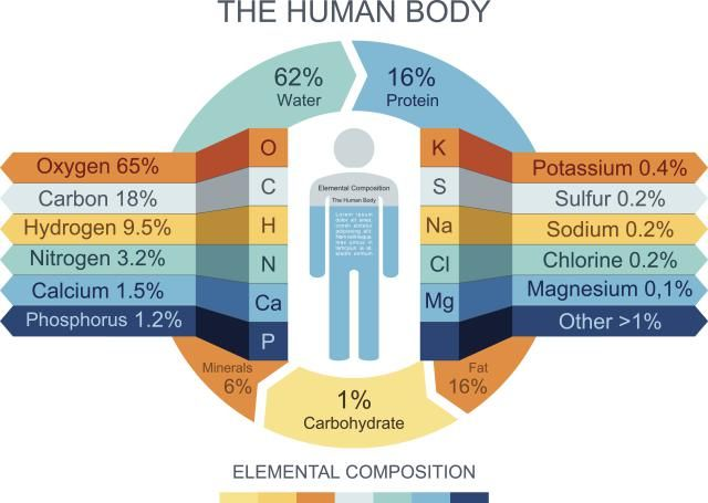 Do You Know the Elements that Make Up Your Body? Human body, Life - best of periodic table of elements vector