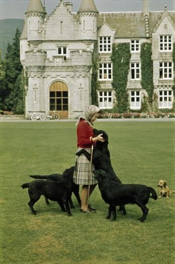 Queen Elizabeth At Balmoral With Her Black Labs And A Dorgi In The Background To Them She S Just Mum Her Majesty The Queen Queen Elizabeth Elizabeth Ii