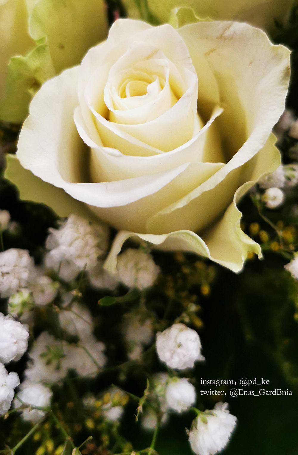 Snapchat Enasart Www Instagram Com Pd Ke تصويري ايناس الغاردينيا تصوير جوال تصوير السعودية جدة بني مالك الجنوب جنوب ال In 2020 Arabic Books Flowers Rose