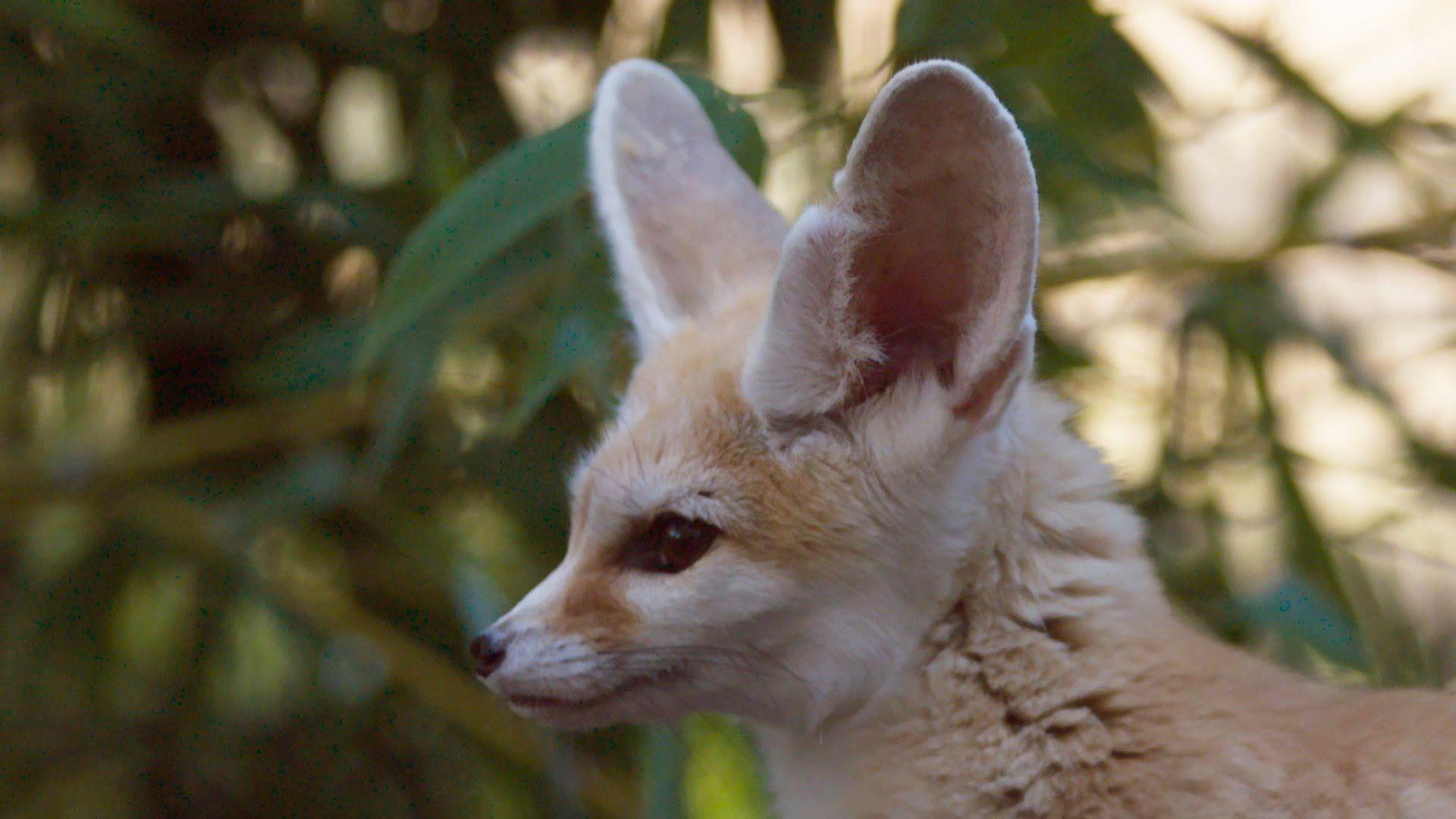 Pin by Y.F C on FOX* Super cute animals, Cute animals