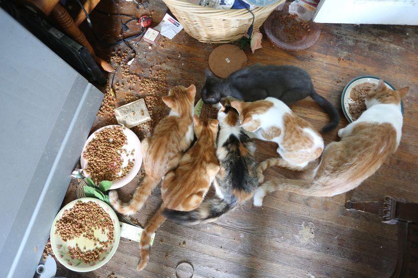 Park Art|My WordPress Blog_Animal Sanctuary Volunteer Opportunities Near Me