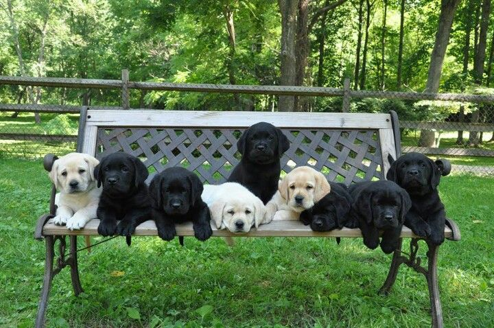 Wounded Warrior Connection litter. <3