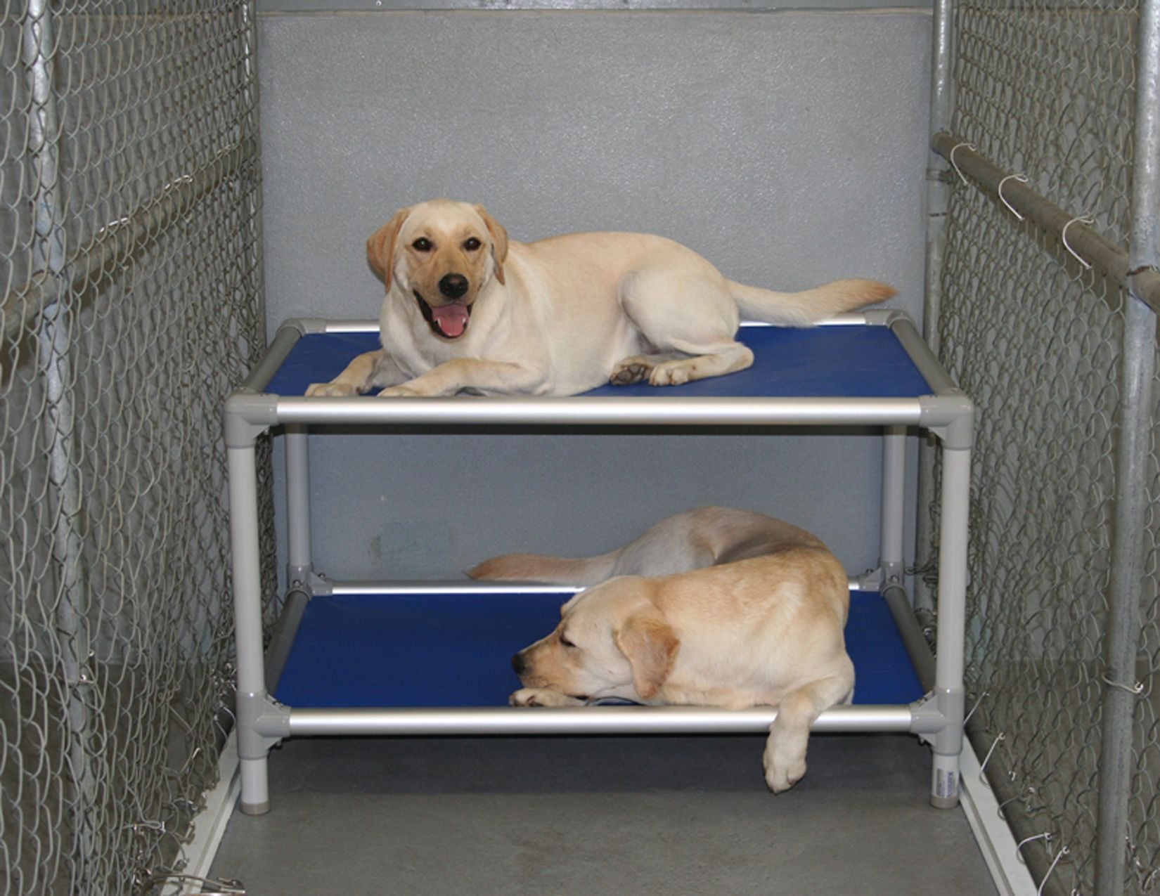 Heat rises, brother... Dog bunk beds, Dog bed, Chew