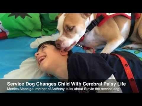 Un perro  Staffordshire Bull Terrier llamado Stevie ha ganado la batalla junto a su mejor amigo, un niño con parálisis cerebral para poder asistir  juntos a la escuela después de que el gerente de la escuela se lo prohibiera.