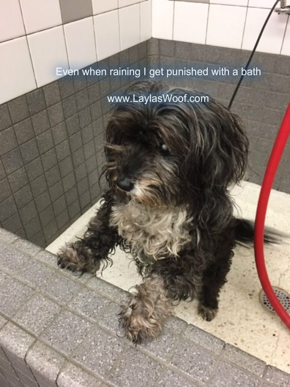 Mom punished me with a bath (With images) Funny dog