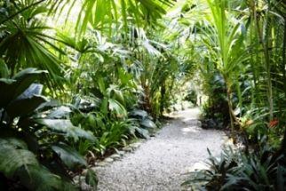 Tropical Garden Design Ideas Planten Design House