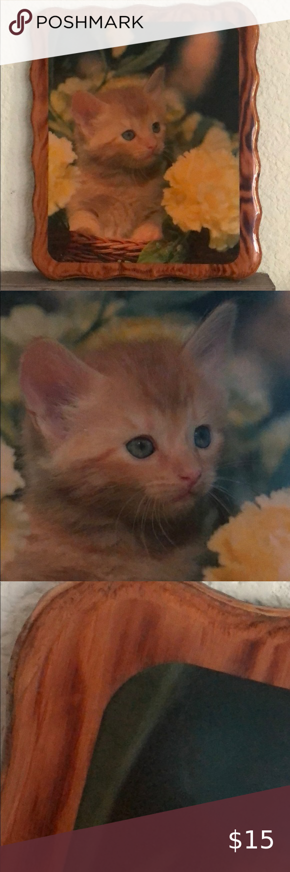 Wooden Kitten Photo In 2020 Kitten Photos Kitten Photo