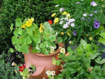 20 Reasons To Grow This Amazing Herb Strawberry Plants 400 x 300