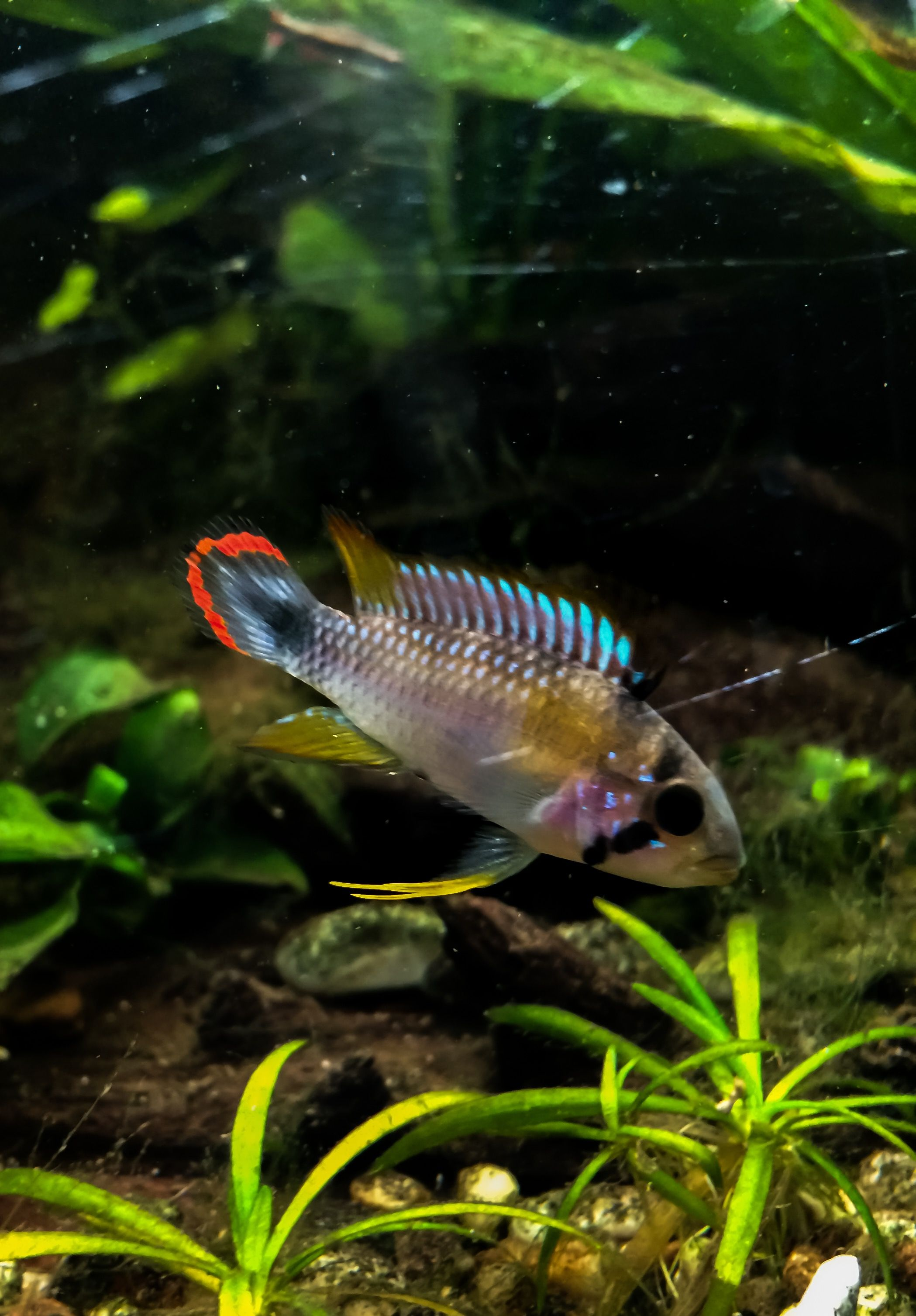 Freshwater aquarium fish for sale online uk - Countless Species Of Fish Are Kept At Home As Pets There Are Several Tropical Fish Online Stores