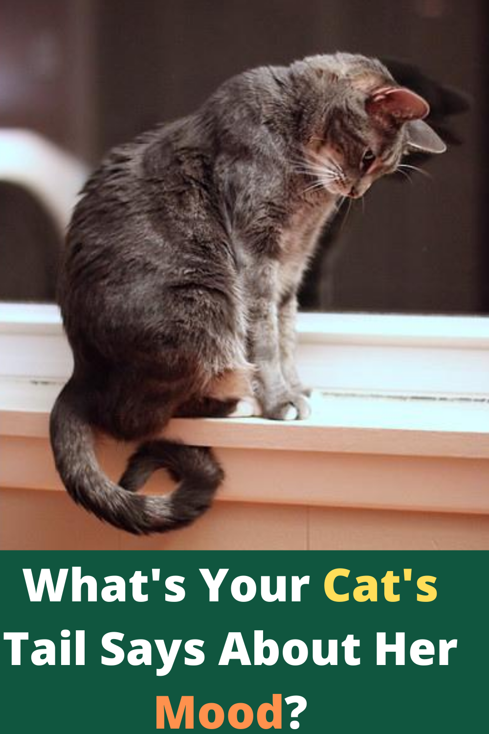 What Your Cat Is Telling With Their Tail In 2020 Cat Language Cats Cat Language Signs