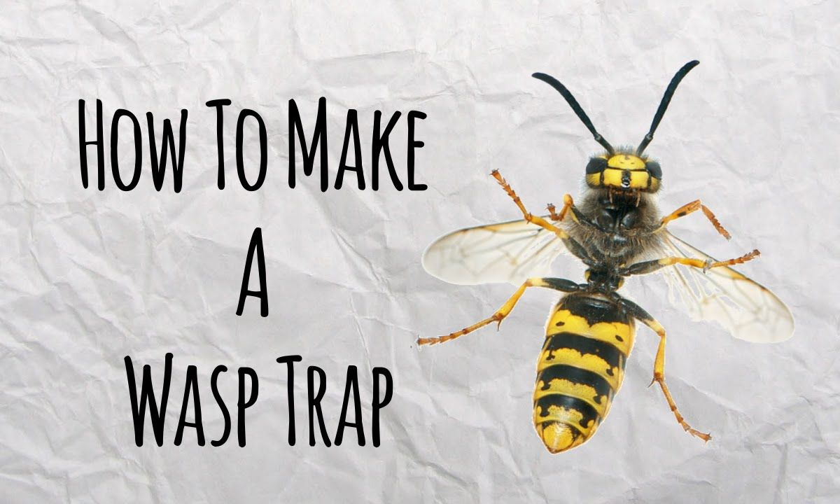 How To Make A Wasp Trap For 1 Cent Easiest And Cheapest Way To Get Rid Of Yellow Jackets Wasp Traps Wasp Organic Raised Garden Beds