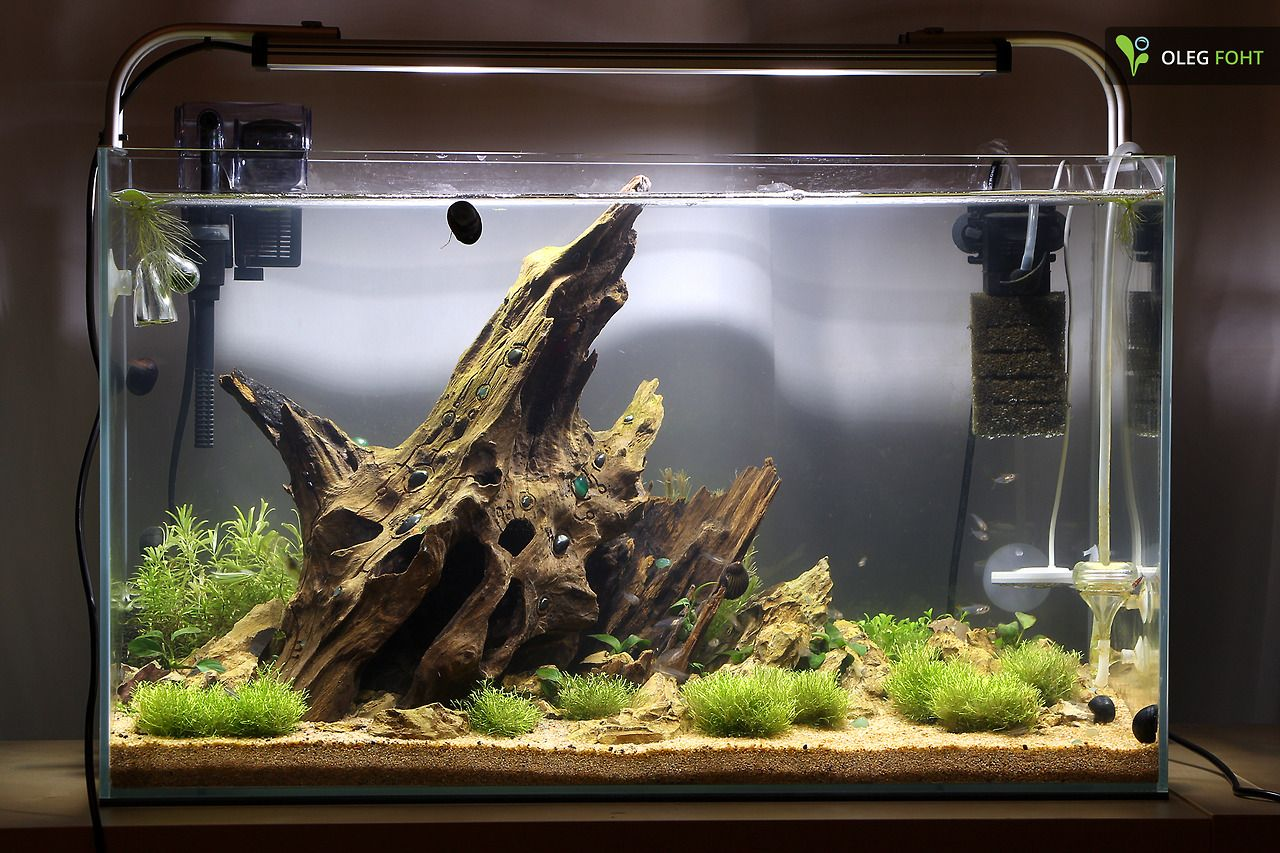 Biconeo Aquascaping Neues 60l Becken With Images Aquascape Aquarium Aquascape Aquarium Landscape