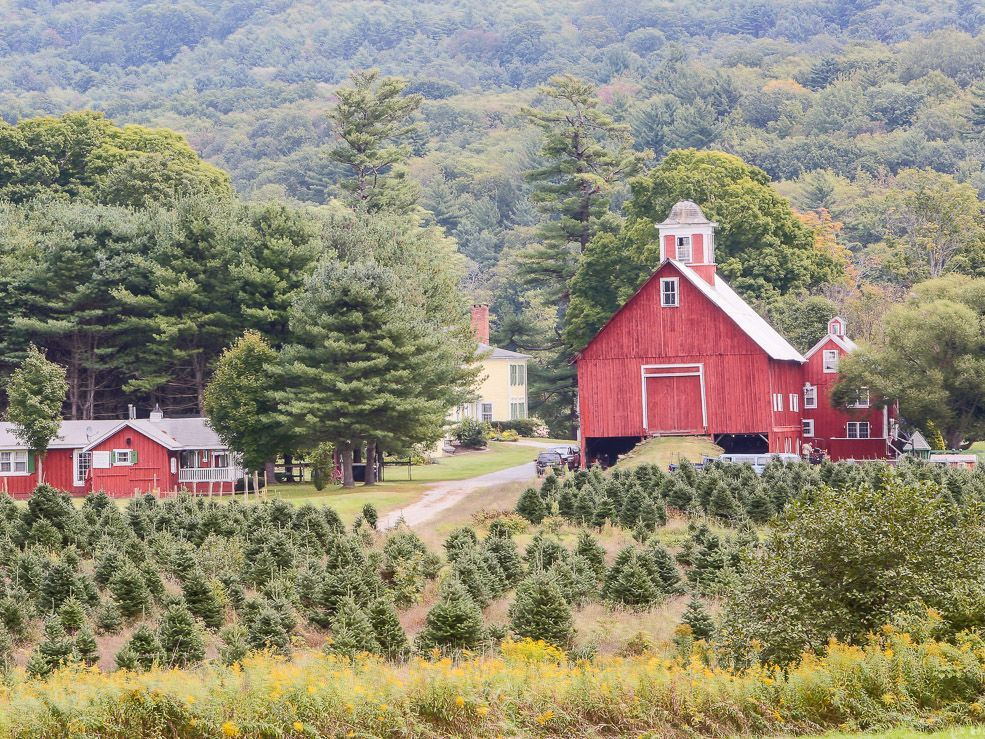 Vermont Couple In Their 80s Lists Christmas Tree Farm For Sale We Really Have It All Christmas Tree Farm Farmhouse Christmas Tree Old Farm Houses