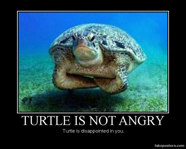 One angry turtle.