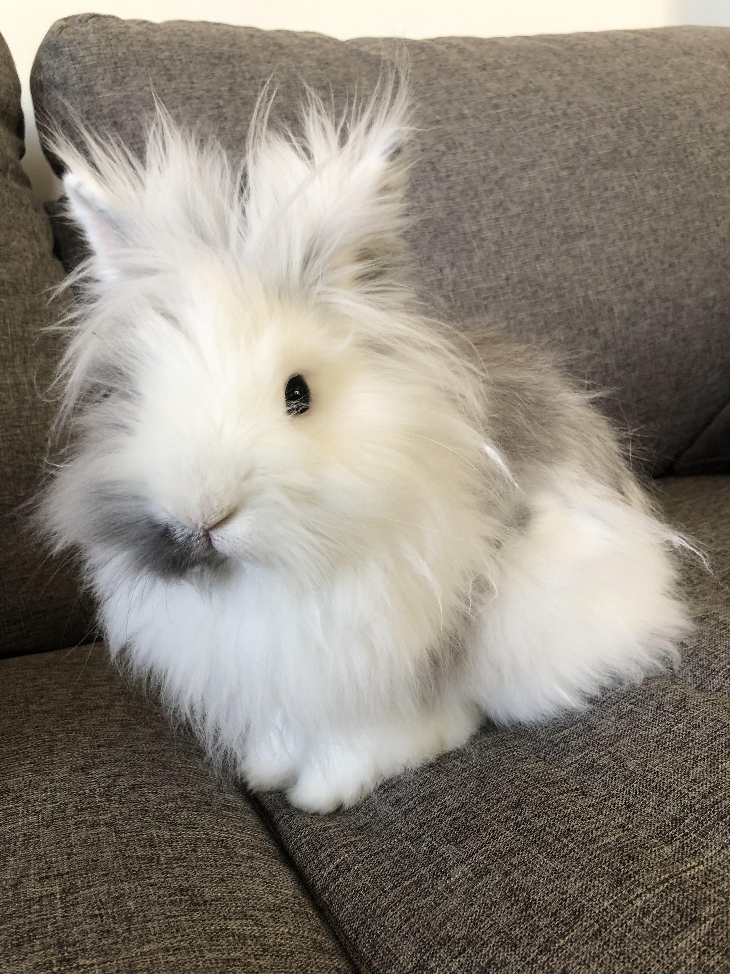 Daily Dose Of Bean Do Rabbits Make Good Pets For Children Are Rabbits Easy To Look After Do You Love Bunnies Cute Baby Bunnies Cute Baby Animals Pet Bunny
