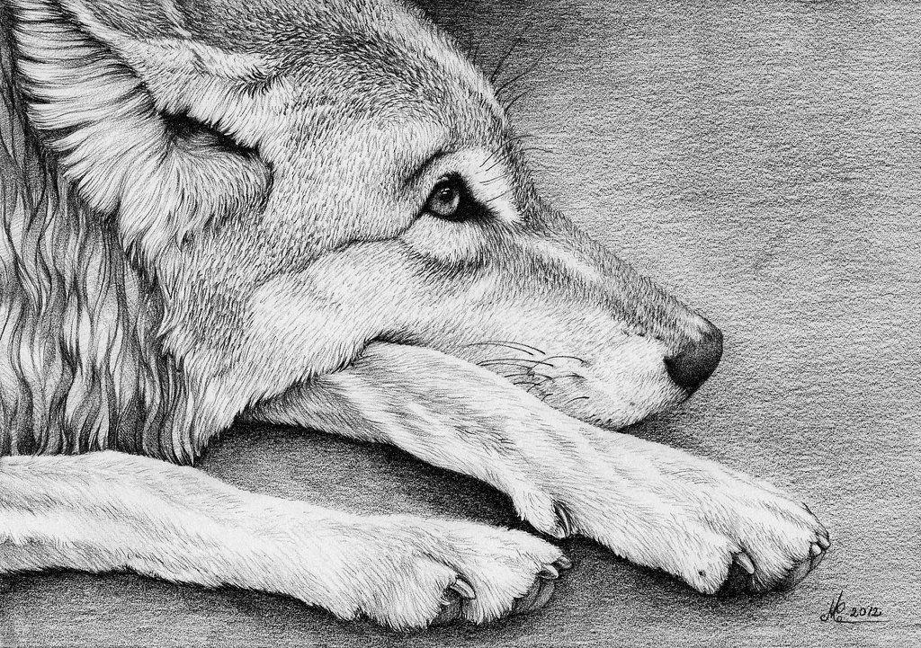 Sad Wolf II By Christina Manderscheidt (christinamandy)