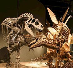 Museum of Nature & Science~Denver, Co