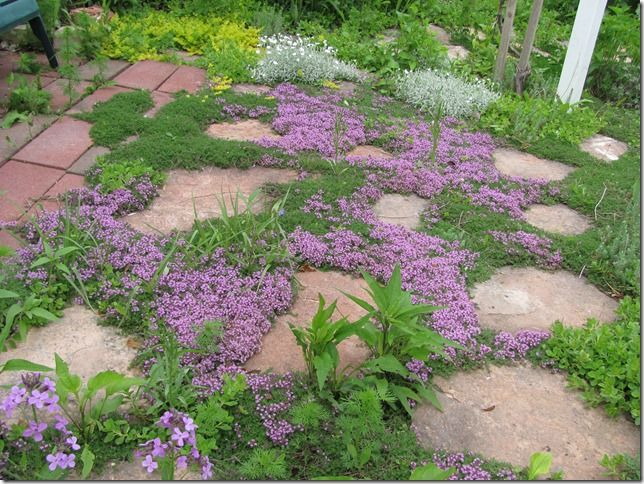 Thyme And Ground Cover Between Pavers