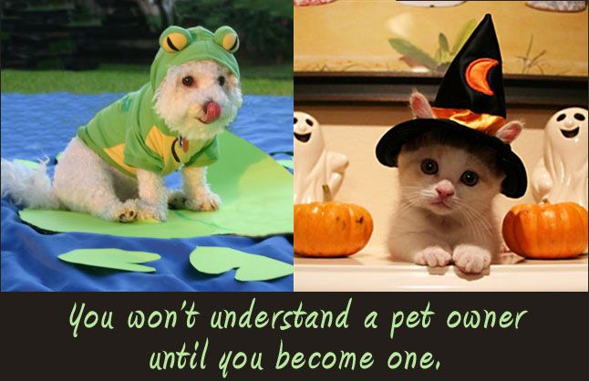 Pet Owner Truth Animal Obsessed Pets Animals Funny