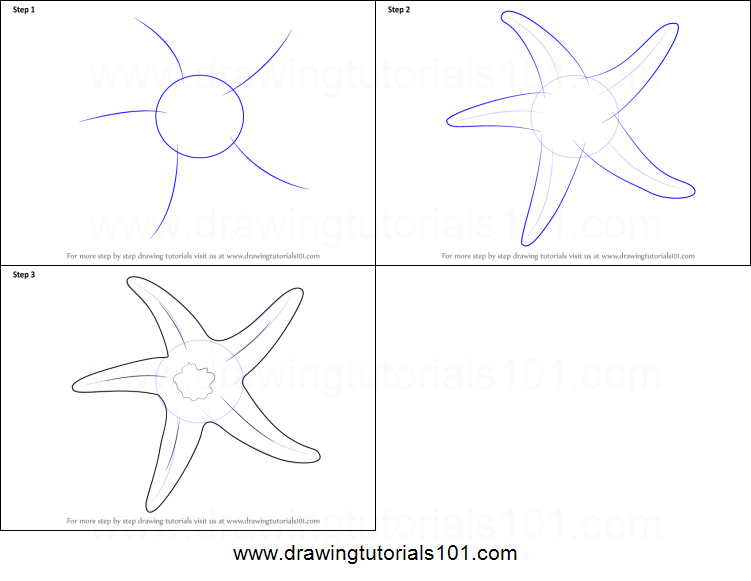 How to Draw a Starfish printable step by step drawing sheet    DrawingTutorials101.com 37722f02756