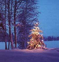 Starting a Christmas Tree Business - Modern Homesteading | Modern ...