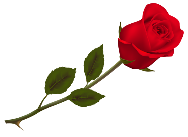 Transparent Beautiful Red Rose Png Picture Red Rose Png Rose Flower Png Red Roses