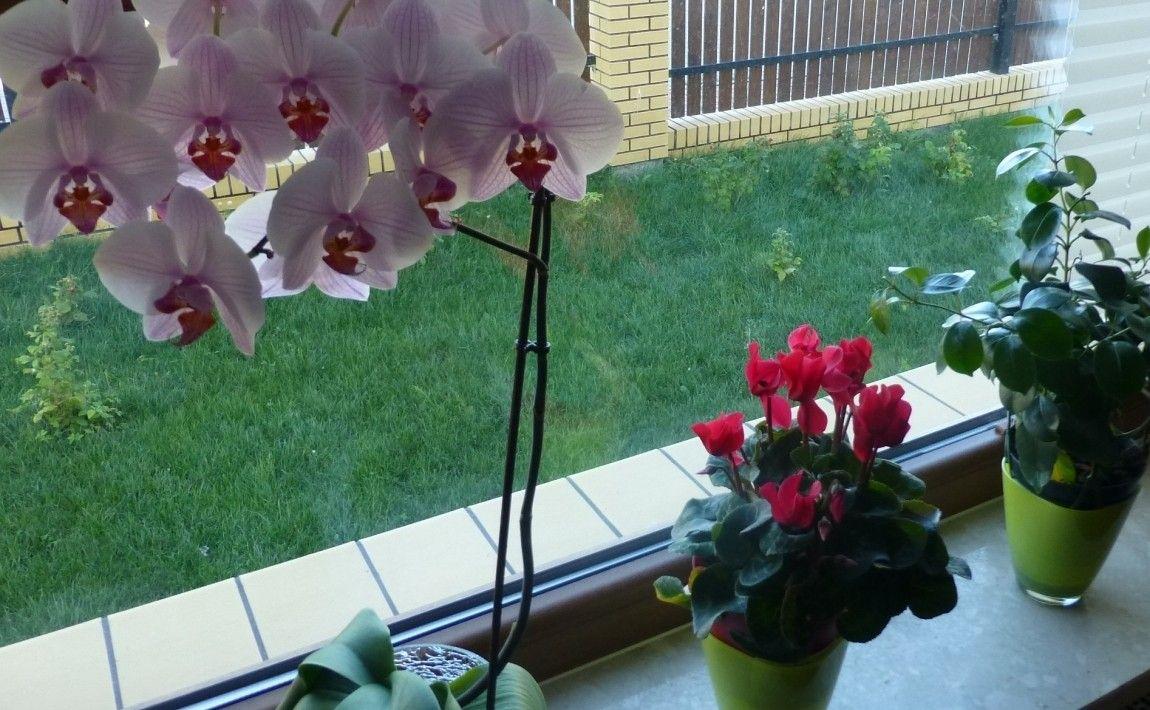 Pielegnacja Kwiatow Doniczkowych Domowe Sposoby E Ogrodek Plants