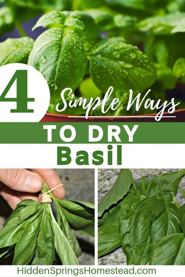 Learn How To Dry Fresh Basil Easily With Any Of These 4 Ways How To Make It Dry Out Without Mold And How How To Dry Basil Freezing Basil Freezing Fresh Herbs