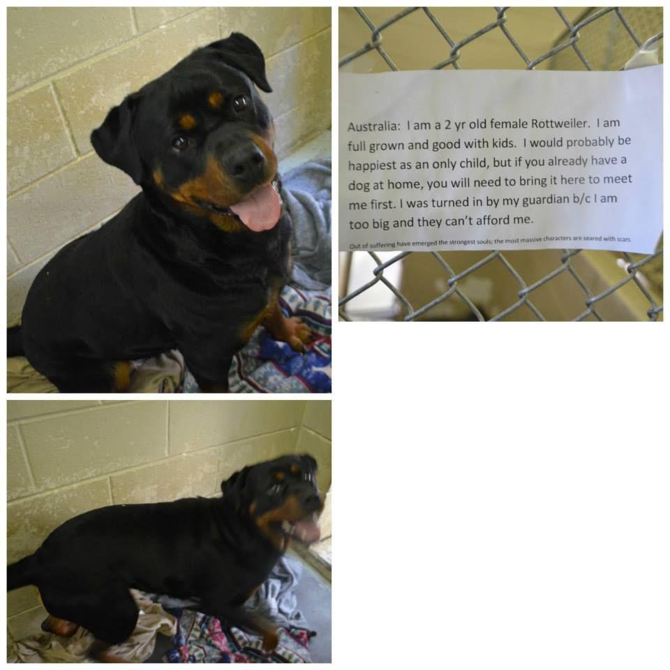 Available 32915 washington county tn animal shelter