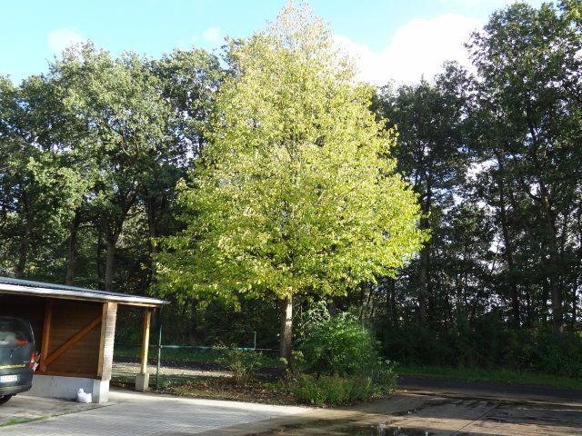 Baumschule Eggert - Blütensträucher, Baumschulen, Heckenpflanzen - heckenpflanzen