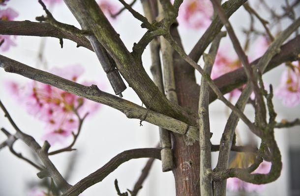 boom maken van takken - Google zoeken - kleuters | Pinterest ...