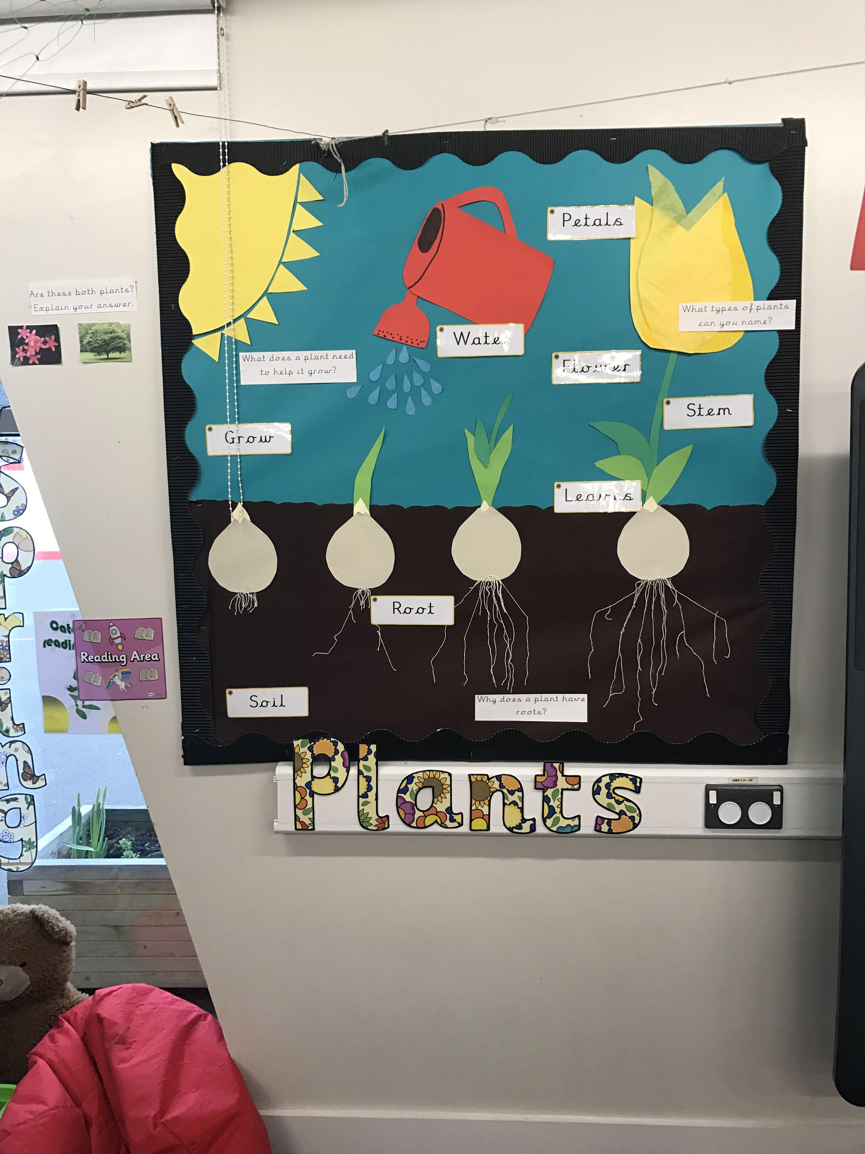 Plants Seed To Plant Display Ks1 Year 1