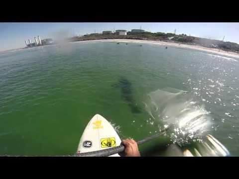 El Porto Shark 5 -13 -14