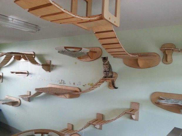 parcours pour chats par goldtatze pont en bois espace de jeux et les pattes. Black Bedroom Furniture Sets. Home Design Ideas