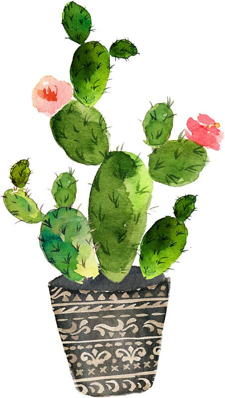 'Watercolor cactus' Sticker by SouthPrints