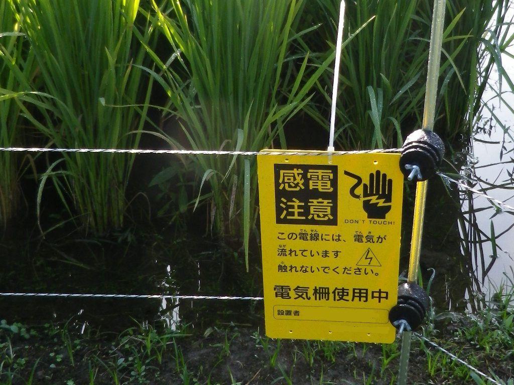 2012年9月19日 山間の田圃で見かけました。 農家と冬の準備の動物と攻防は始まっています。