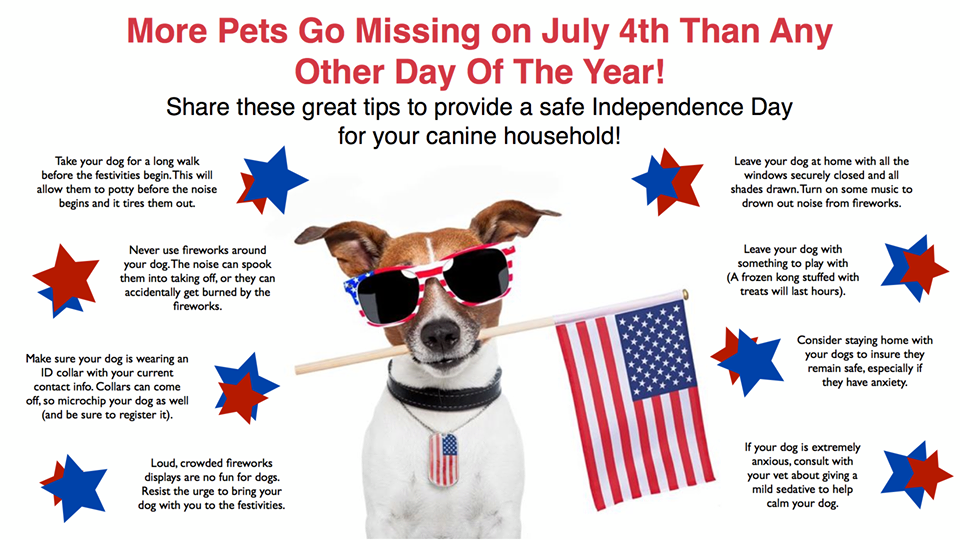 Image result for pets fourth of july