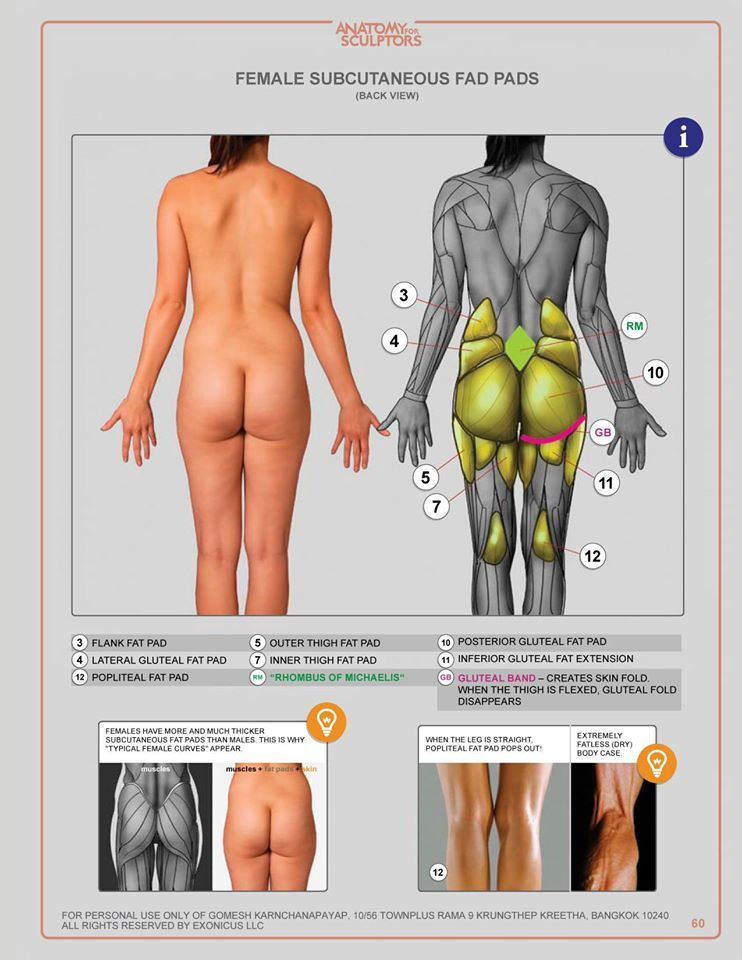 Pin By Edward Manubay On Anatomy References Female Pinterest