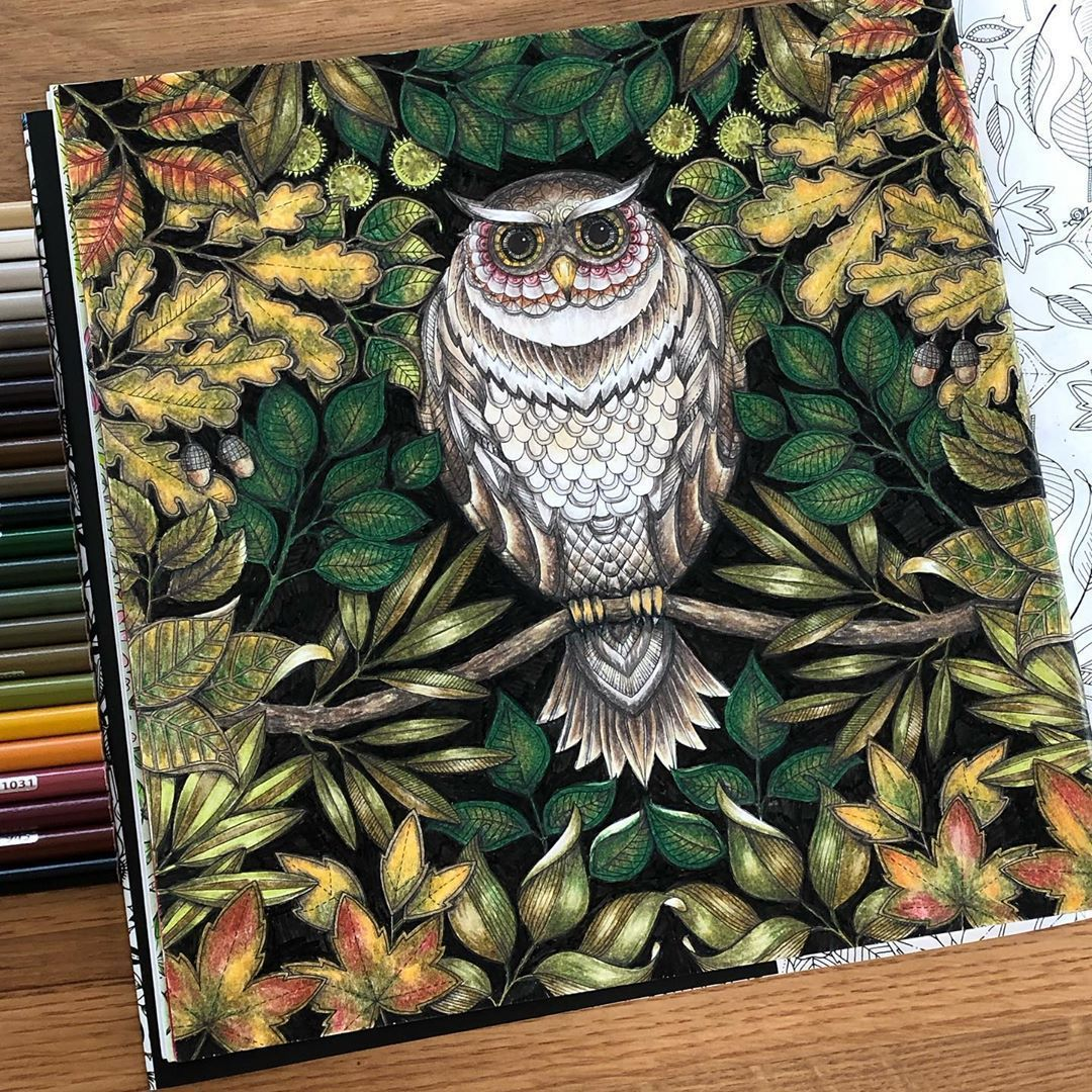 Owl In The Autumn Forest From Secret Garden By Johanna Ba Johanna Basford Secret Garden Johanna Basford Enchanted Forest Secret Garden Coloring Book Finished