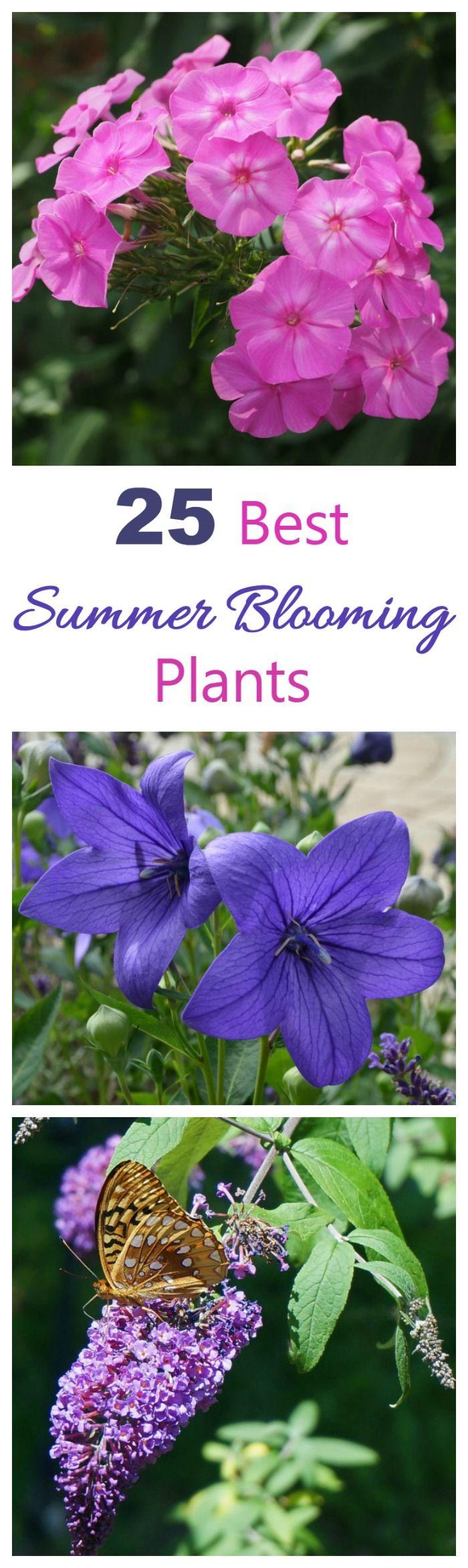 Summer Blooming Plants – 25 Favorites for Long Season Color