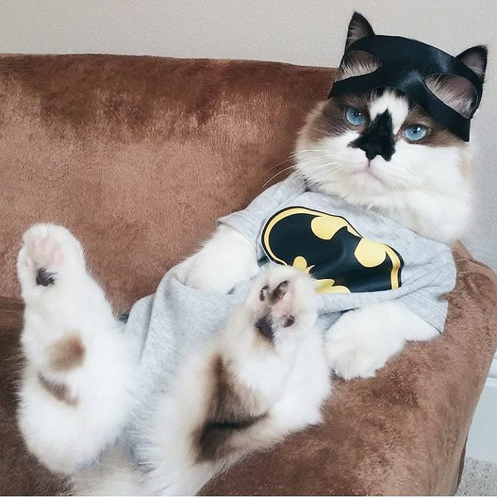 """catinfinite: """"Waiting for Catwoman.. """""""