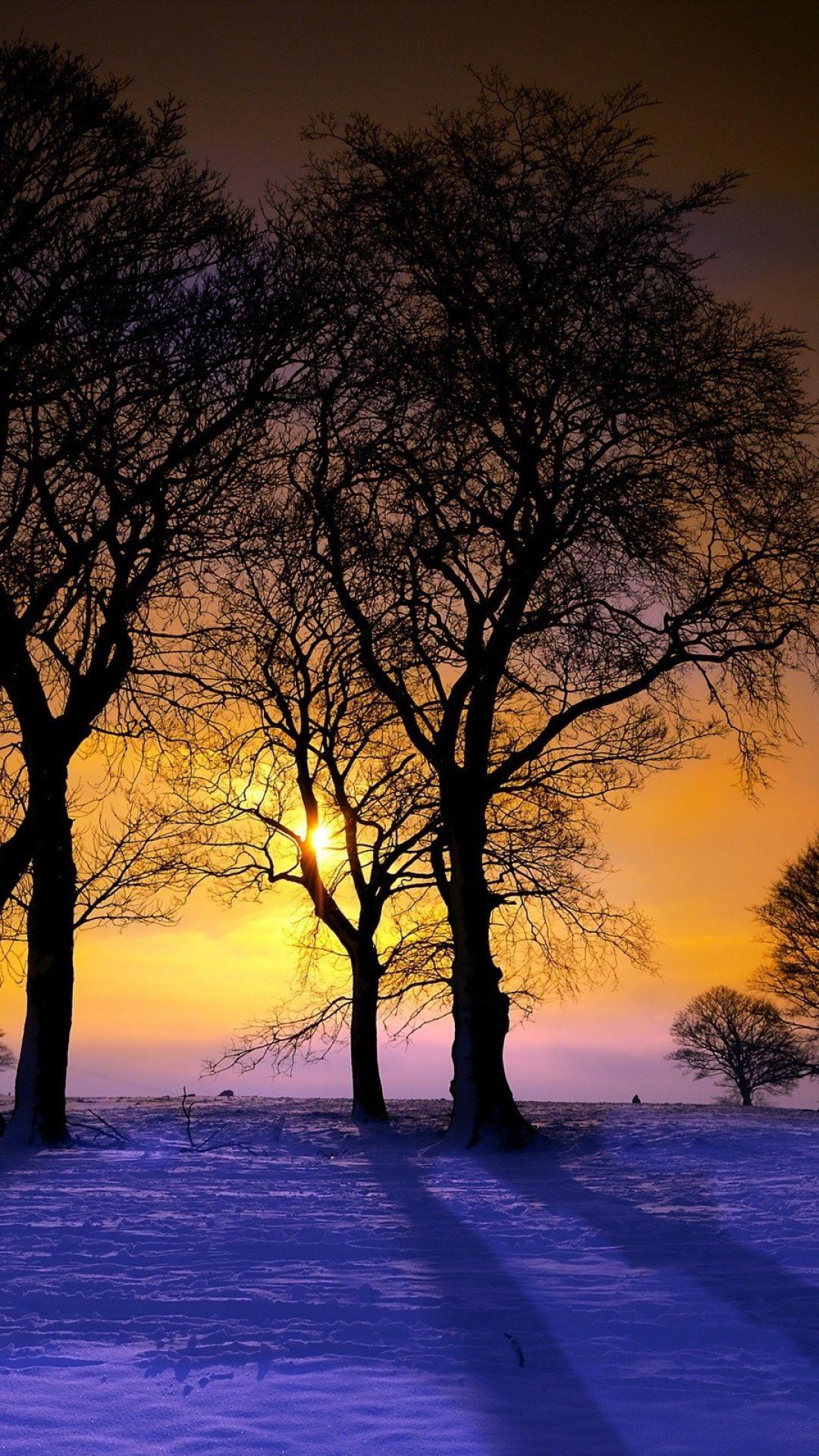 download wallpaper 1080x1920 sunset, winter, trees, landscape sony