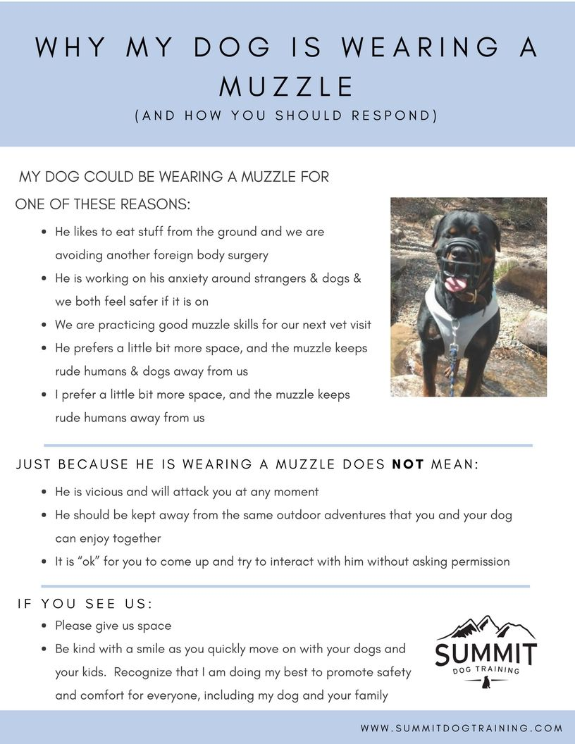 Muzzle Wearing Dog Training Fort Collins Colorado Muzzle Body