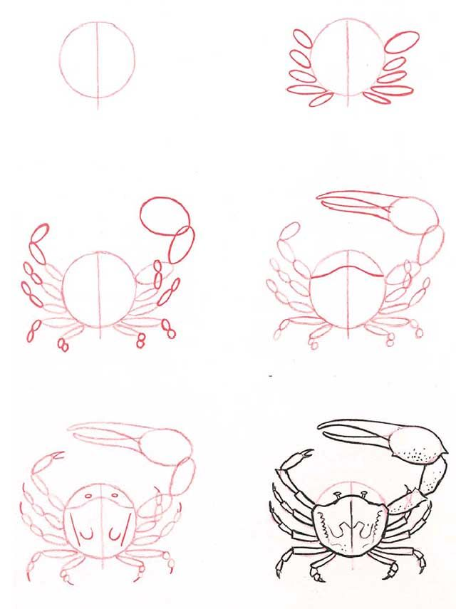 Hoe teken je een crab | Dibujo | Pinterest | Cangrejo, Dibujar y Dibujo