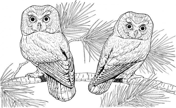 Adult Coloring Pages Free To Print Paginas Para Colorir Adult