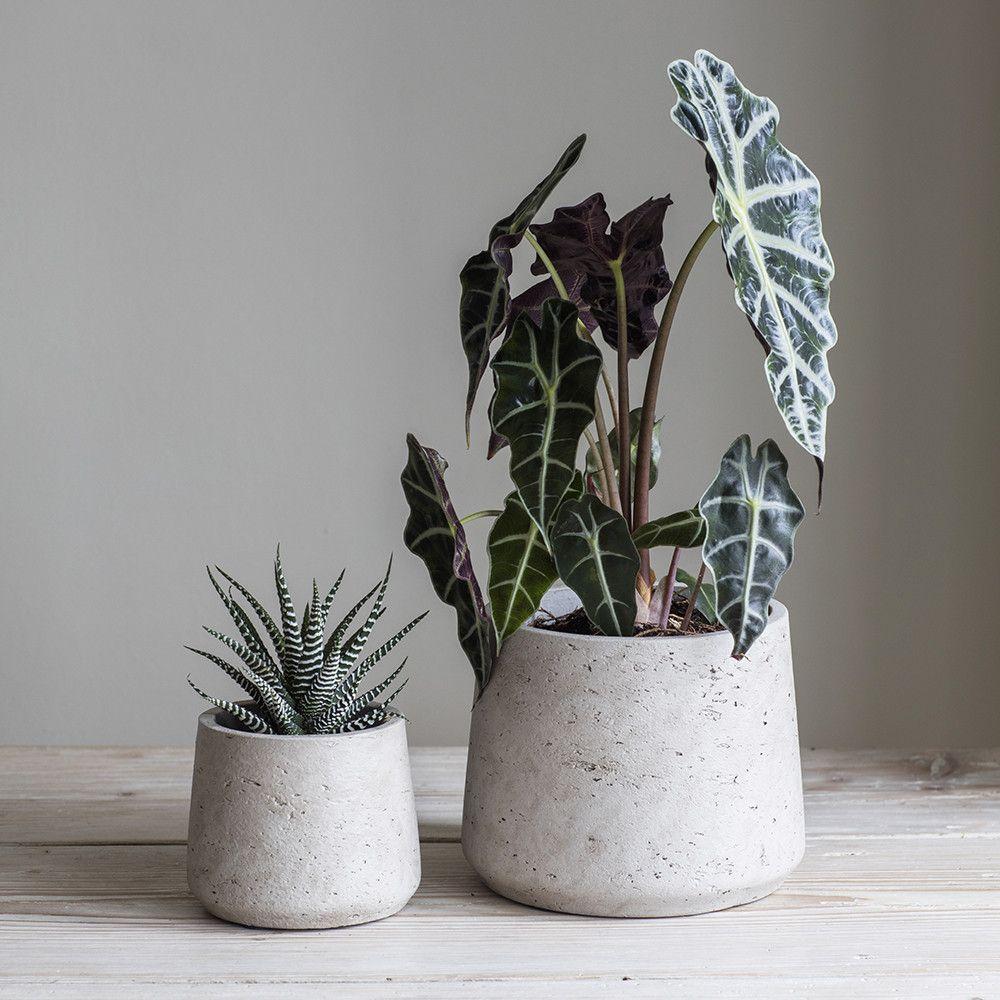 bildergebnis für hay blumentopf beton untersetzer | floral in 2018