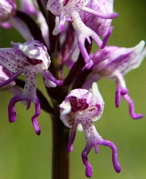 Grappige bloemen ;-)