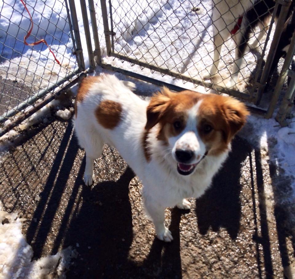 12+ Orange county animal rescue ideas