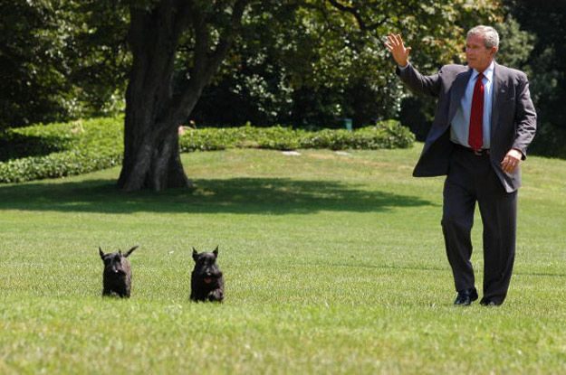 A History Of White House Pets In Photographs Scottie Dog Pets
